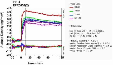 OI-RD Scanning - Anti-MUM1 antibody [EPR5654(2)] - BSA and Azide free (ab248453)
