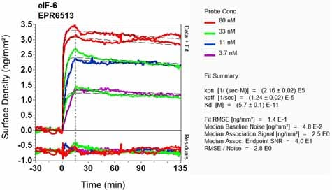 OI-RD Scanning - Anti-eIF-6 antibody [EPR6513] - BSA and Azide free (ab248473)