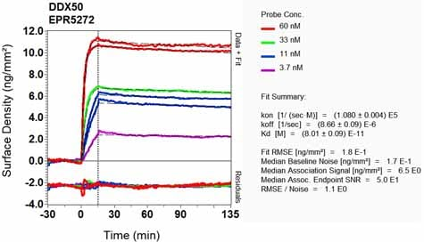 OI-RD Scanning - Anti-DDX50 antibody [EPR5272] - BSA and Azide free (ab248528)