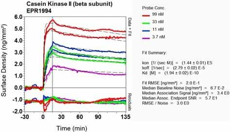 Other - Anti-Casein Kinase 2 beta antibody [EPR1994] - BSA and Azide free (ab248559)