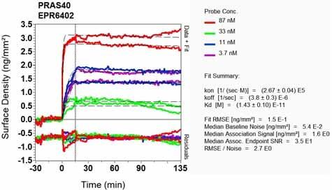 Other - Anti-PRAS40 antibody [EPR6402] - BSA and Azide free (ab248564)