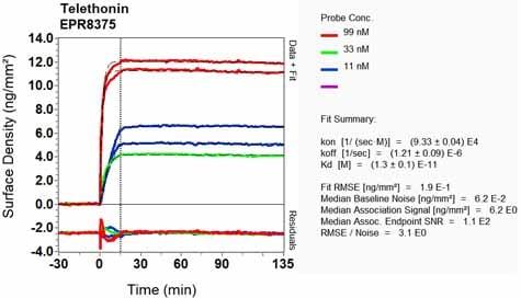 Other - Anti-Telethonin antibody [EPR8375] - BSA and Azide free (ab248591)