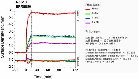 OI-RD Scanning - Anti-NOP10 antibody [EPR8856] - BSA and Azide free (ab248630)