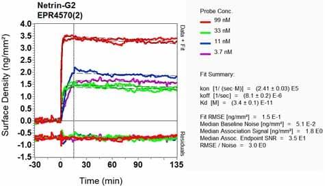 OI-RD Scanning - Anti-Netrin G2 antibody [EPR4570(2)] - BSA and Azide free (ab248632)