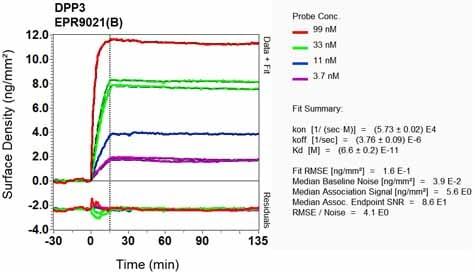 OI-RD Scanning - Anti-DPP3 antibody [EPR9021(B)] - BSA and Azide free (ab248633)