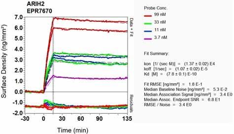 Other - Anti-ARIH2/TRIAD1 antibody [EPR7670] - BSA and Azide free (ab248635)