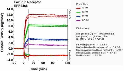 OI-RD Scanning - Anti-67kDa Laminin Receptor antibody [EPR8468] - BSA and Azide free (ab248653)