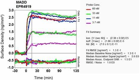 Other - Anti-DENN antibody [EPR4919] - BSA and Azide free (ab248688)