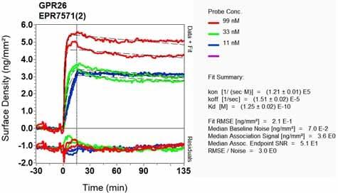 OI-RD Scanning - Anti-GPCR GPR26 antibody [EPR7571(2)] - BSA and Azide free (ab248724)