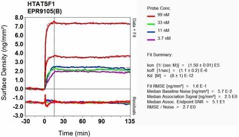 Other - Anti-Tat-SF1 antibody [EPR9105(B)] - BSA and Azide free (ab248731)
