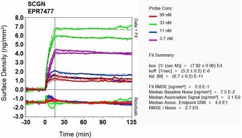 OI-RD Scanning - Anti-SCGN/Secretagogin antibody [EPR7477] - BSA and Azide free (ab248768)