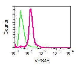 Flow Cytometry - Anti-VPS4B/MIG1 antibody [EPR9225] - BSA and Azide free (ab248775)