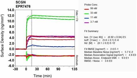 OI-RD Scanning - Anti-SCGN/Secretagogin antibody [EPR7476] - BSA and Azide free (ab248846)