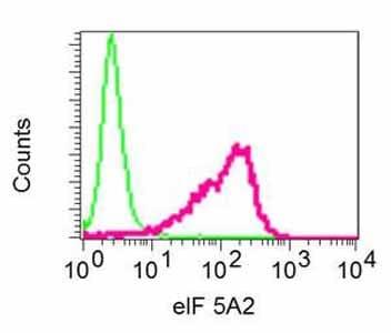 Flow Cytometry (Intracellular) - Anti-eIF5A2 + eIF5A antibody [EPR7411-105] - BSA and Azide free (ab248971)