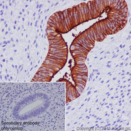Immunohistochemistry (Formalin/PFA-fixed paraffin-embedded sections) - Anti-CPM antibody [EPR8052] - BSA and Azide free (ab248972)