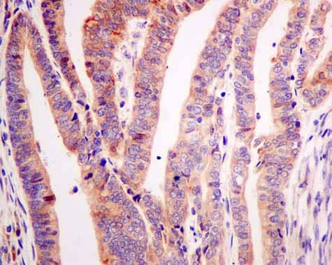 Immunohistochemistry (Formalin/PFA-fixed paraffin-embedded sections) - Anti-ARL 1 antibody [EPR10595] - BSA and Azide free (ab249227)