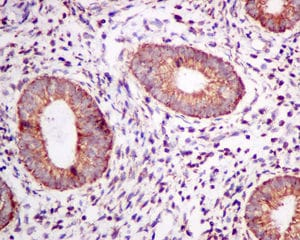 Immunohistochemistry (Formalin/PFA-fixed paraffin-embedded sections) - Anti-TPST2 antibody [EPR10569] - BSA and Azide free (ab249299)