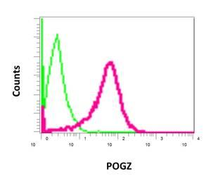 Flow Cytometry - Anti-POGZ antibody [EPR10612] - BSA and Azide free (ab249423)