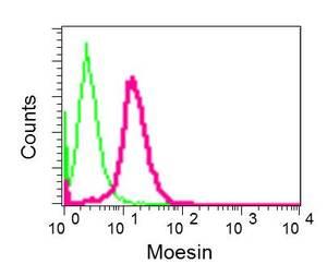Flow Cytometry - Anti-Moesin antibody [EPR2429(2)] - BSA and Azide free (ab249530)