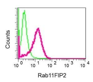 Flow Cytometry - Anti-RAB11-FIP2 antibody [EPR12294] - BSA and Azide free (ab249812)