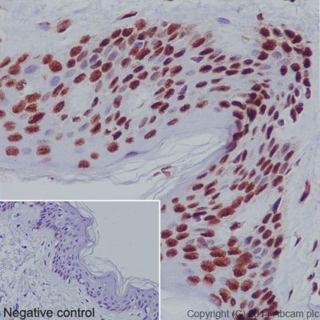 Immunohistochemistry (Formalin/PFA-fixed paraffin-embedded sections) - Anti-Histone H3 (mono methyl K79) antibody [EPR17466] - BSA and Azide free (ab249946)