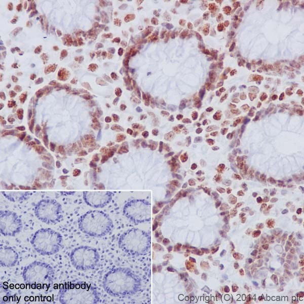 Immunohistochemistry (Formalin/PFA-fixed paraffin-embedded sections) - Anti-Histone H2A (phospho S1) + Histone H4 (phospho S1) antibody [EPR18184] - BSA and Azide free (ab249959)
