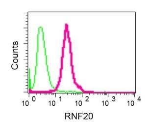 Flow Cytometry - Anti-RNF20 antibody [EPR13563(B)] - BSA and Azide free (ab250297)