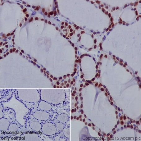 Immunohistochemistry (Formalin/PFA-fixed paraffin-embedded sections) - Anti-PAX8 antibody [EPR13510] - BSA and Azide free (ab250312)