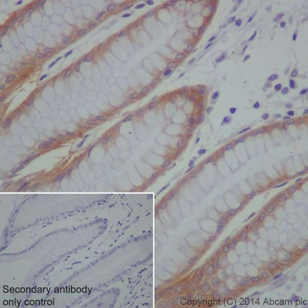 Immunohistochemistry (Formalin/PFA-fixed paraffin-embedded sections) - Anti-LLGL1 antibody [EPR18899] - BSA and Azide free (ab250640)