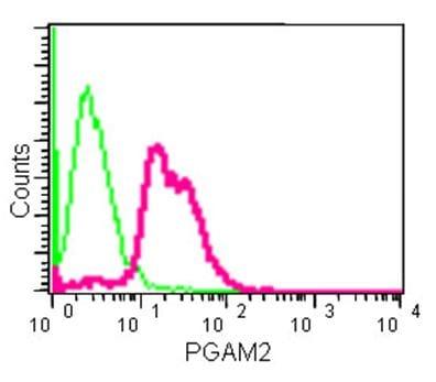 Flow Cytometry (Intracellular) - Anti-PGAM2 antibody [EPR15193(B)] - BSA and Azide free (ab250643)