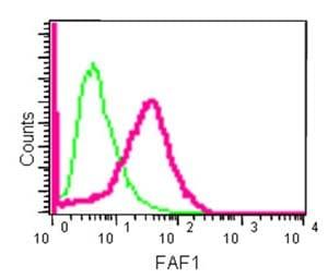 Flow Cytometry - Anti-FAF1 antibody [EPR14754] - BSA and Azide free (ab250653)