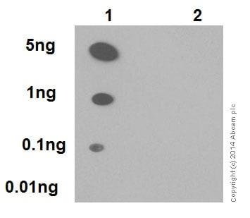Dot Blot - Anti-p53 (phospho S376) antibody [EPR17730] - BSA and Azide free (ab250673)