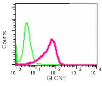 Flow Cytometry - Anti-GNE antibody [EPR15058] - BSA and Azide free (ab250798)