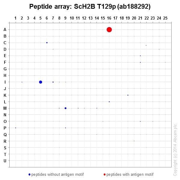Peptide Array - Anti-Histone H2B (phospho T129) antibody [EPR18095] - BSA and Azide free (ab250945)