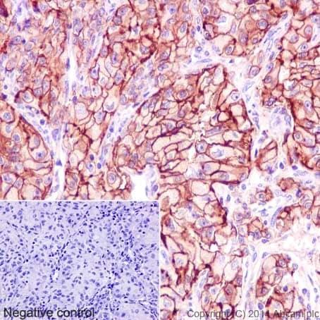 Immunohistochemistry (Formalin/PFA-fixed paraffin-embedded sections) - Anti-ATP1B1 antibody [EPR12195] - BSA and Azide free (ab251176)
