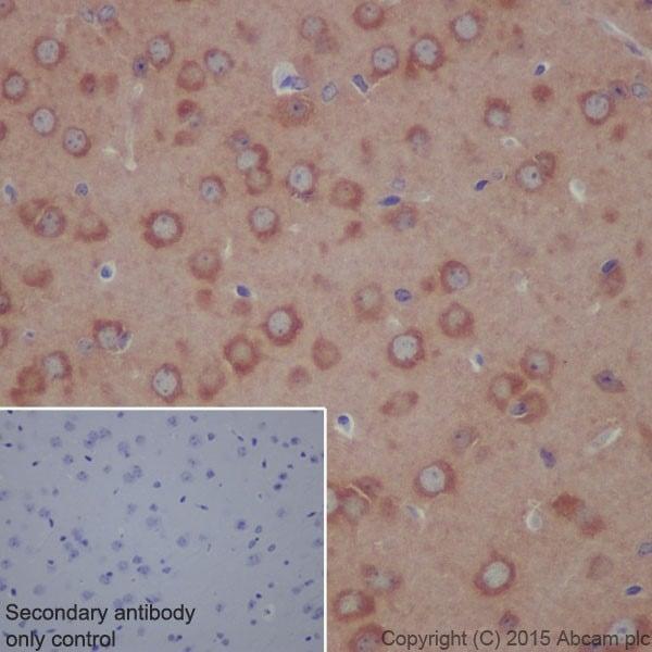 Immunohistochemistry (Formalin/PFA-fixed paraffin-embedded sections) - Anti-ATP6V1A antibody [EPR19271] - BSA and Azide free (ab251266)