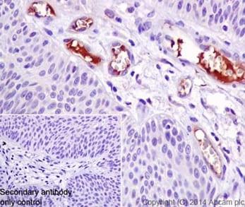 Immunohistochemistry (Formalin/PFA-fixed paraffin-embedded sections) - Anti-C4BPA antibody [EPR14780] - BSA and Azide free (ab251309)