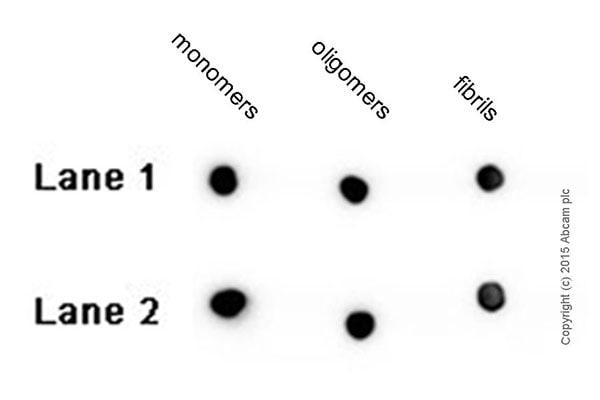 Dot Blot - Anti-Amyloid Fibril antibody [mOC87] - BSA and Azide free (ab251335)