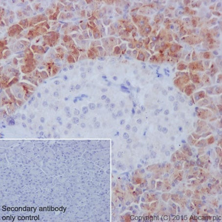 Immunohistochemistry (Formalin/PFA-fixed paraffin-embedded sections) - Anti-REG3A + REG3G antibody [EPRR18188] - BSA and Azide free (ab251357)