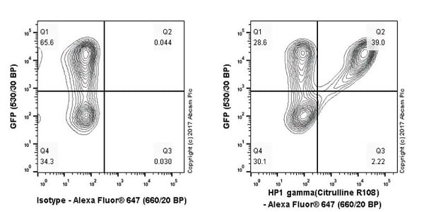 Flow Cytometry - Anti-HP1 gamma/CBX3 (citrulline R108) antibody [EPR19802-202] - BSA and Azide free (ab251364)