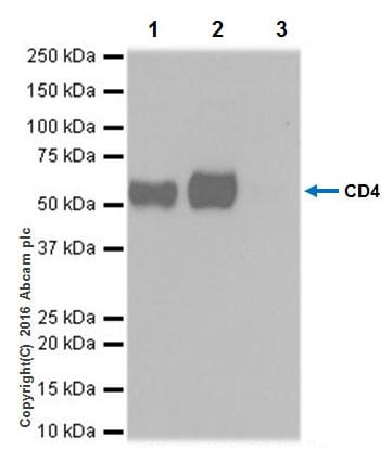 Immunoprecipitation - Anti-CD4 antibody [EPR20122] - BSA and Azide free (ab251480)