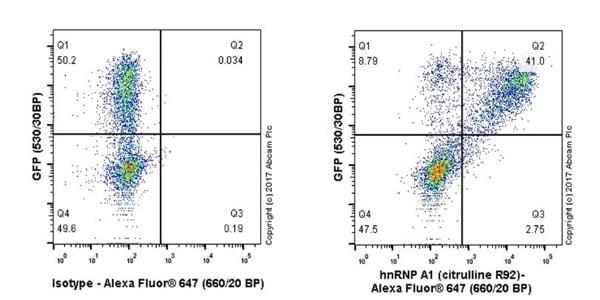 Flow Cytometry - Anti-hnRNP A1 (citrulline R92) antibody [EPR20174] - BSA and Azide free (ab251485)
