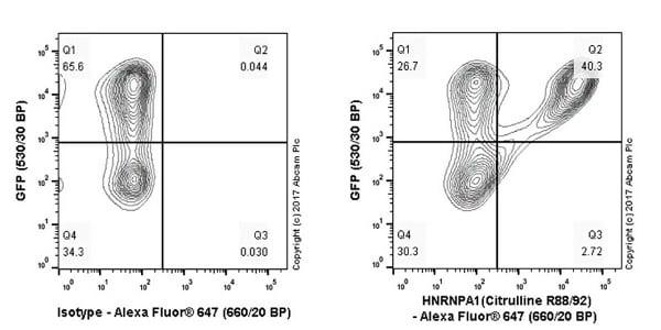 Flow Cytometry - Anti-hnRNP A1 (citrulline R88 + R92) antibody [EPR20175] - BSA and Azide free (ab251486)