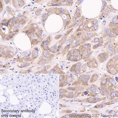 Immunohistochemistry (Formalin/PFA-fixed paraffin-embedded sections) - Anti-ENT1 antibody [EPR20556] - BSA and Azide free (ab251581)