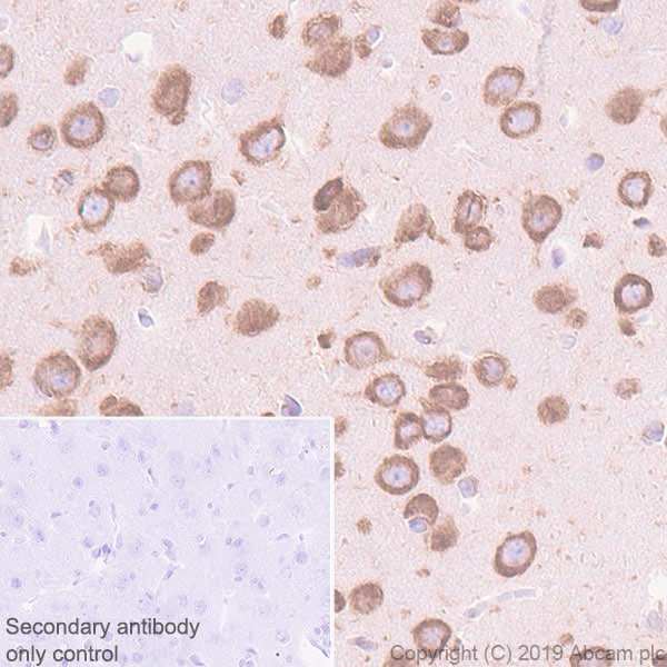 Immunohistochemistry (Formalin/PFA-fixed paraffin-embedded sections) - Anti-YTHDF1 antibody [EPR22349-16] (ab252346)