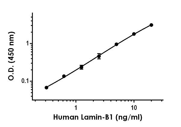 Example of human Lamin-B1 standard curve in 1X Cell Extraction Buffer PTR.