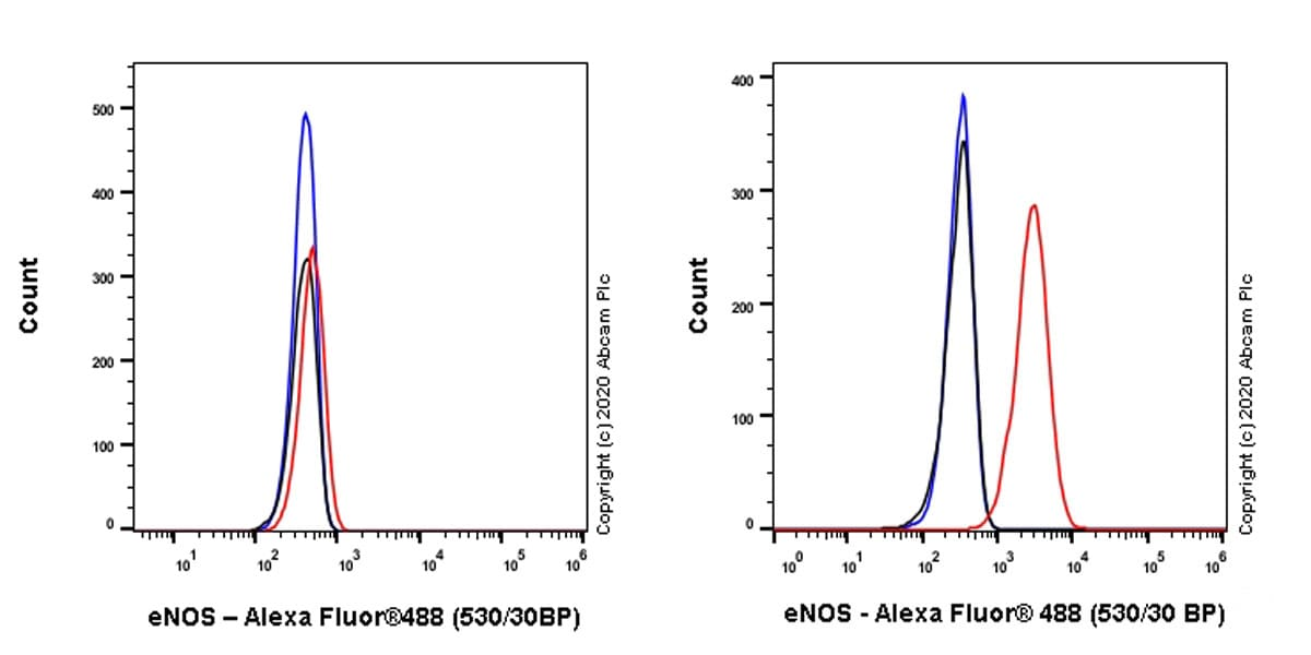 Flow Cytometry - Anti-eNOS antibody [EPR23750-3] (ab252439)