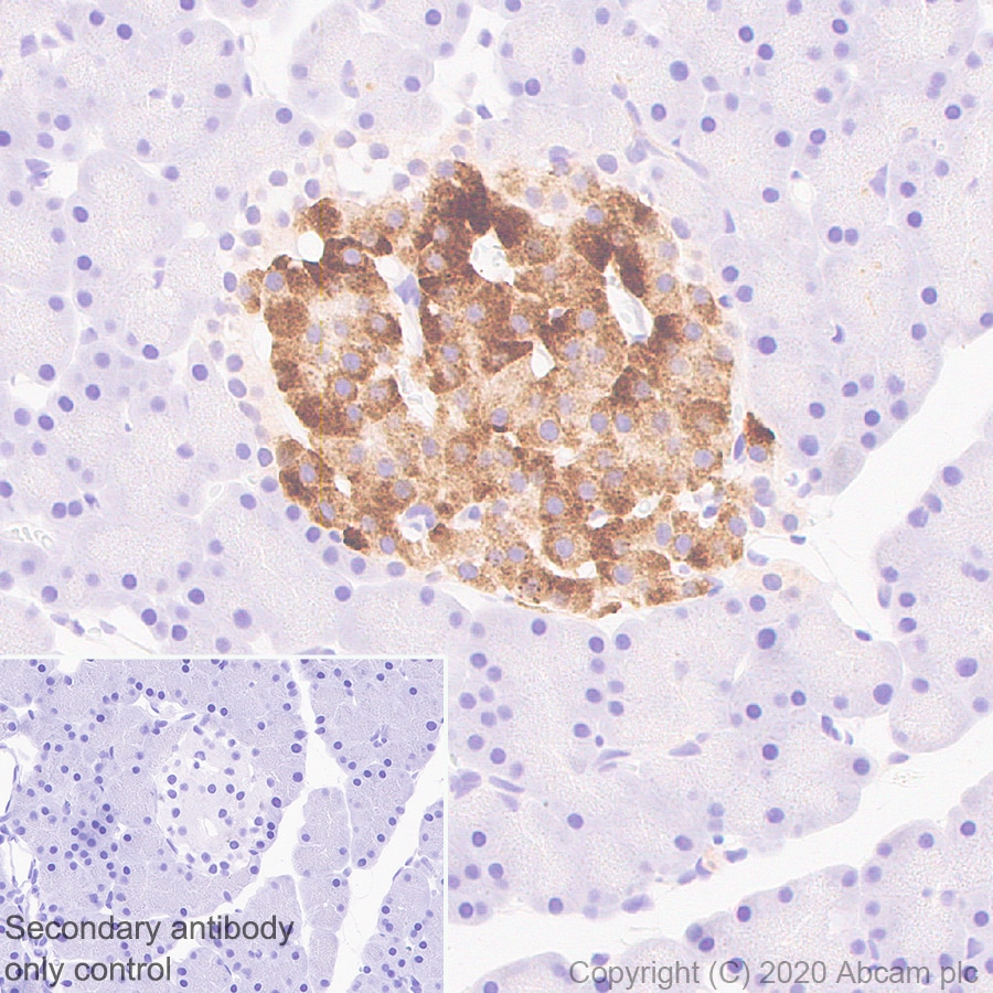 Immunohistochemistry (Formalin/PFA-fixed paraffin-embedded sections) - Anti-Kv1.1 potassium channel antibody [K20/78] (ab252537)