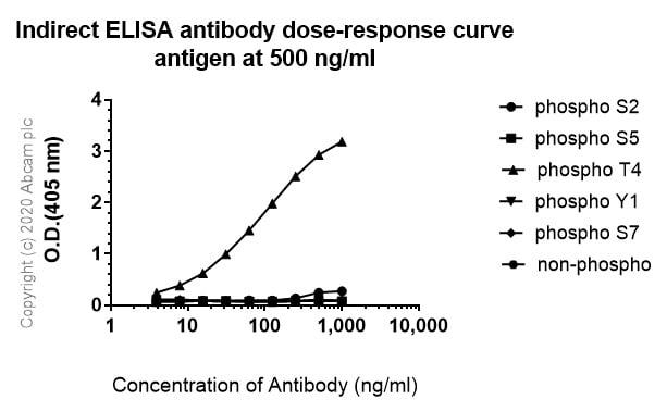 ELISA - Anti-RNA polymerase II CTD repeat YSPTSPS (phospho T4) antibody [6D7] (ab252851)