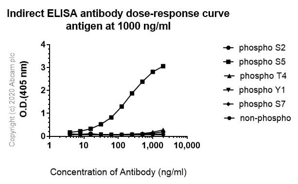ELISA - Anti-RNA polymerase II CTD repeat YSPTSPS (phospho S5) antibody [3E8] (ab252852)